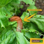 Solabiol SOLIMA750 Anti-Limaces et Escargots-Granules D'origine Naturelle 750g/150 m2, Jaune de la marque Solabiol image 1 produit