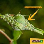 Solabiol SOPUCPAL1 Pucerons Choc au Pyrèthre Végétal Transparent 1 L de la marque Solabiol image 3 produit