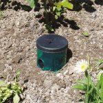 Swissinno 1361001W Natural Control Piège à limaces avec 1-portion de Bait–Vert de la marque Swissinno image 2 produit
