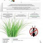 TERRA NOSTRA Anti Fourmis Naturel Bidon Concentre, 1L de la marque TERRA NOSTRA image 2 produit