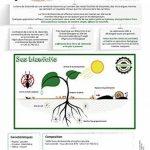 TERRA NOSTRA Terre de Diatomée Anti Fourmis Poudreuse 300gr Utilisable en agriculture biologique de la marque TERRA NOSTRA image 2 produit