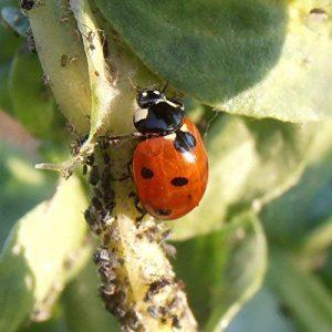 traitement contre les fourmis dans le jardin TOP 12 image 0 produit