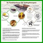 Trichogrammes contre mites alimentaires 3 livraisons de 4 cartes (3000 œufs) de la marque AMW Nützlinge image 2 produit