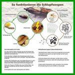 Trichogrammes contre mites alimentaires 3 livraisons pack de 10 cartes (1000 oeufs) de la marque Der Motten-Shop image 1 produit