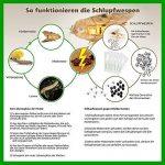 Trichogrammes contre mites textiles 6 livraisons de 3000 œufs de la marque AMW Nützlinge image 1 produit