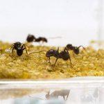 tuer fourmilière jardin TOP 4 image 2 produit