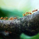tuer fourmilière jardin TOP 7 image 4 produit
