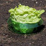 Windhager anneau anti-limaces, anti-limaces, 6pièces–diamètre: 23cm–vert–pour la défense contre les limaces–protège les plantes contre les animaux de la marque Windhager image 3 produit